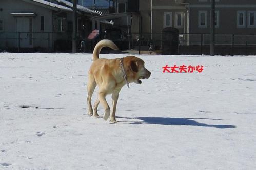 IMG_4515_20120126165131.jpg