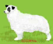 羊Rossiちゃん