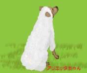 羊アリエッタ