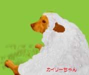 羊カイリー