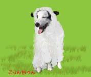 羊こりんちゃん