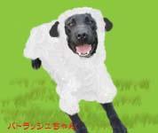 羊パトラッシュくん