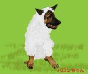 羊バロンちゃん