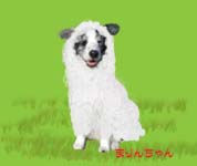 羊まりんちゃん