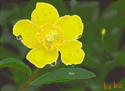 雨の中黄色い花