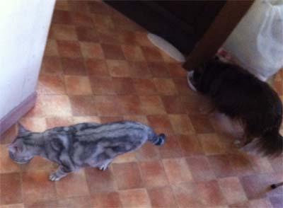 犬の餌を食べてるサスキア