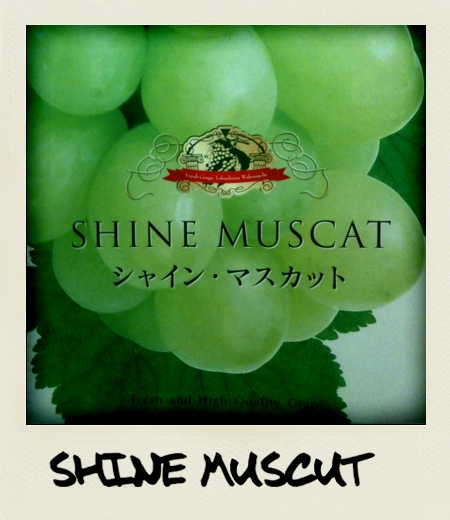 shine muscut