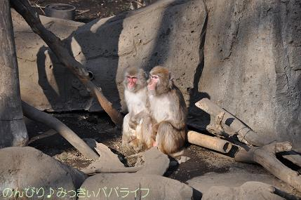 chikozanzoo01.jpg