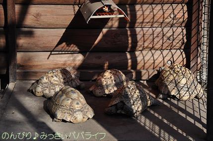 chikozanzoo08.jpg