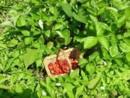 2012.5 strawberryroseessyakuyaku 035