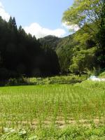 2012.8 himawarimangetsu 009