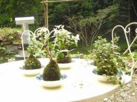 2012.10 picnic party-kokedama 045