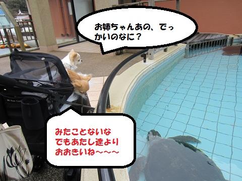 水族館03