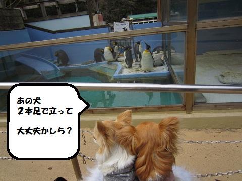 水族館09