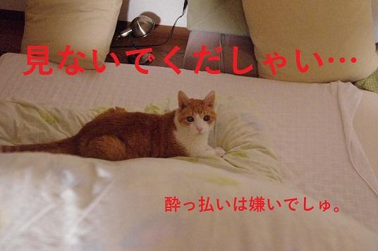 IMGP0703.jpg