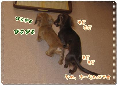 003_20121013091812.jpg
