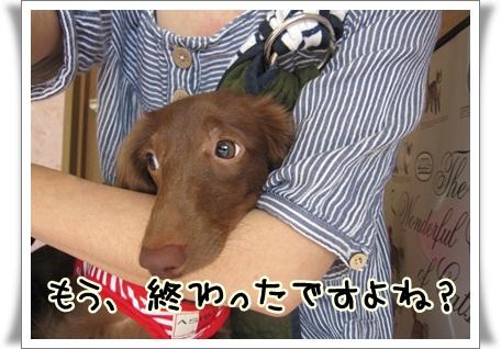 009_20120501111537.jpg
