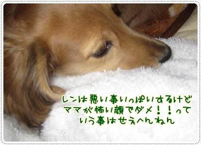 009_20121117090844.jpg