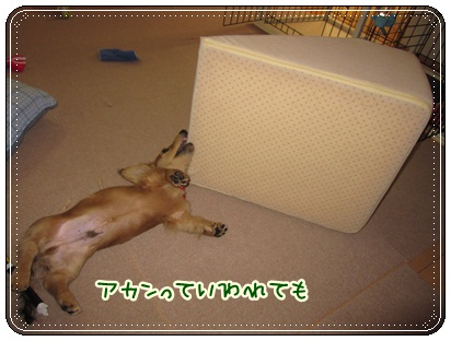 010_20121027102151.jpg