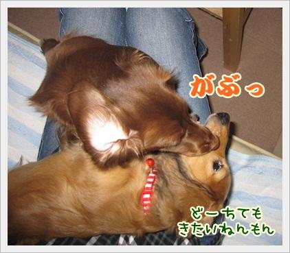 010_20121108191611.jpg