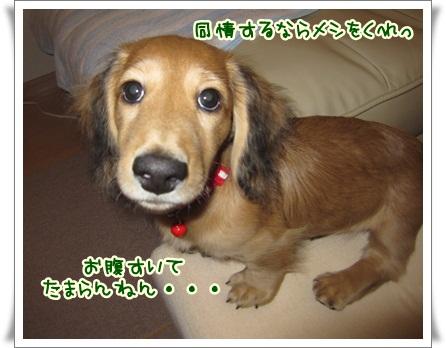 013_20121026155548.jpg