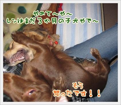 013_20121108185213.jpg