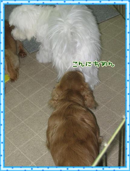 013_20121203091241.jpg