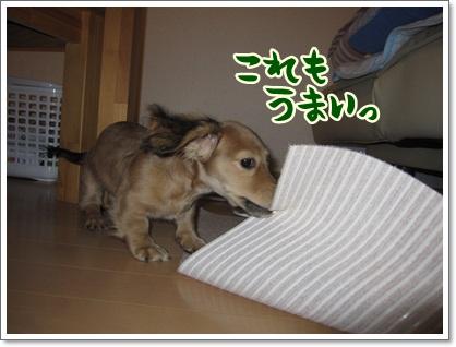 020_20121019214146.jpg