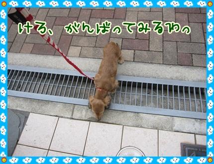 025_20121028110135.jpg