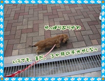 026_20121028110135.jpg