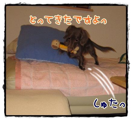 028_20121020204119.jpg