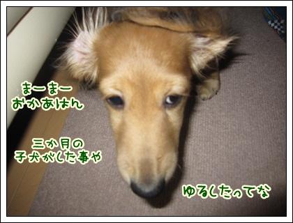 029_20121027102210.jpg