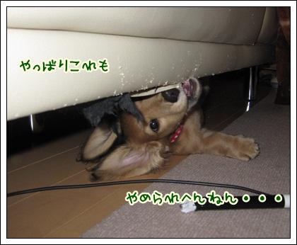 032_20121027102210.jpg