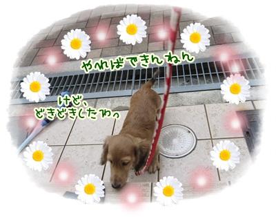033_20121028113407.jpg