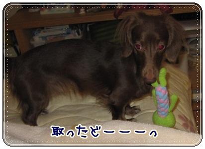 035_20121111100727.jpg