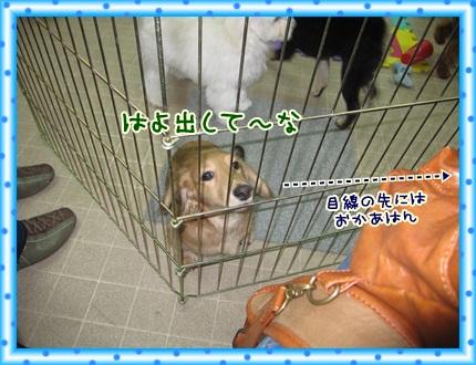 041_20121203091356.jpg