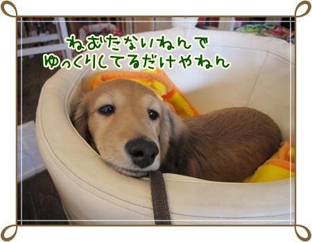 063_20121029180554.jpg