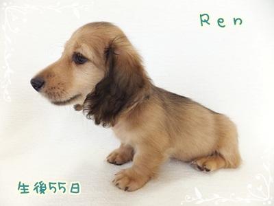 Ren9-13-55-2.jpg