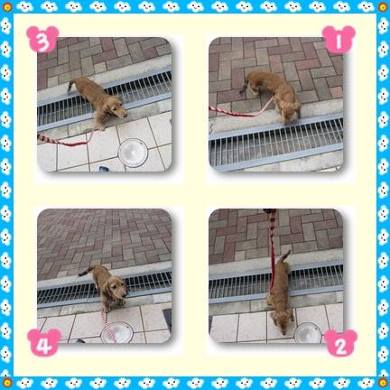 ren1_20121028110146.jpg