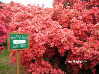 20110505tsutsuji02.jpg