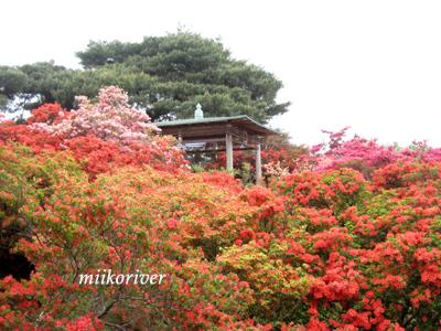 20110505tsutsuji03.jpg