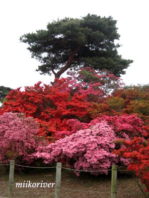 20110505tsutsuji05.jpg