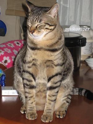 sasuke20110417.jpg