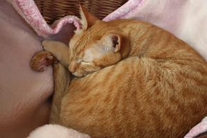 ピンク毛布でぐっすり