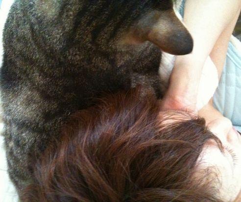 ネコ枕2w