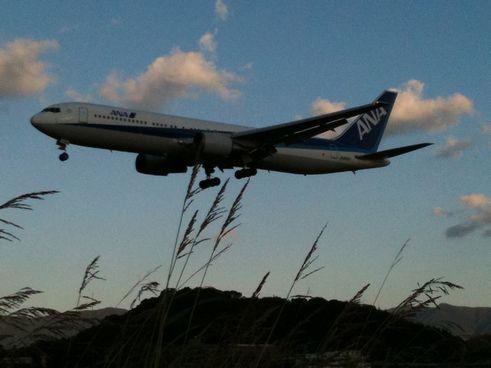 ススキと飛行機w