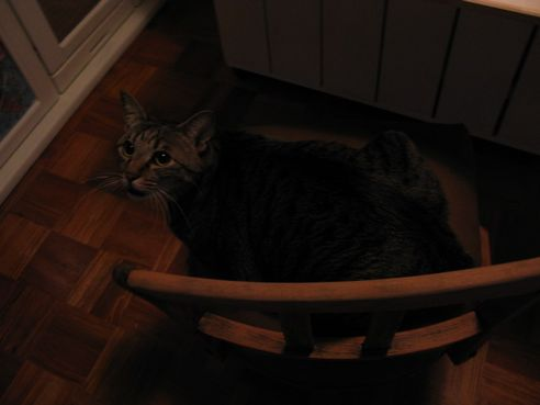 椅子のミー