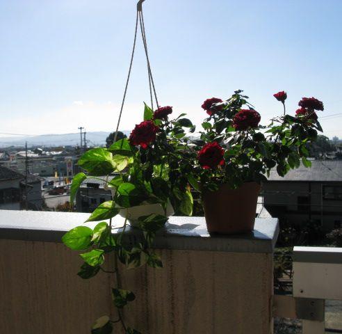 植物の日光浴
