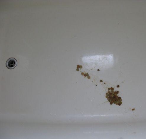 風呂場の嘔吐