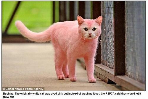 s-pinkcat.jpg